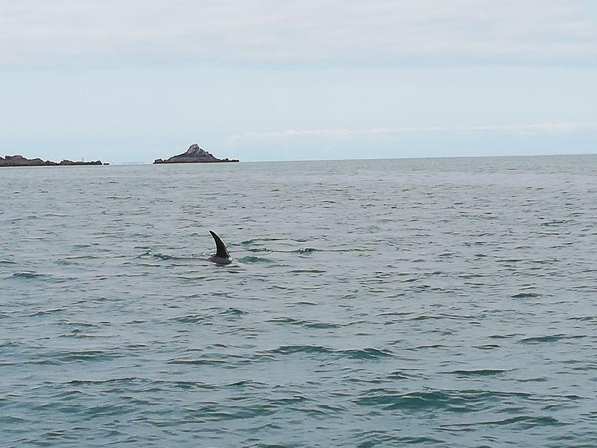 Peu craintif, le dauphin s'approche de l'embarcation