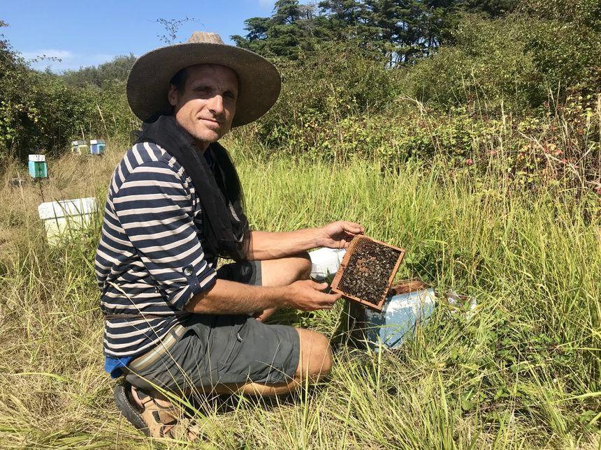 Renan Pointeau, éleveur d'abeilles reines à l'île d'Yeu.