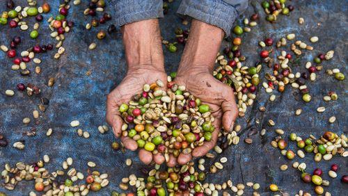 L'épopée des matières premières (8/10) : Thé, café, cacao