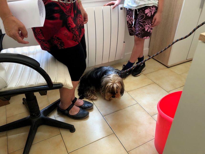 Cette petite chienne arrive à la SPA. Elle a été trouvée sur un parking à Périgueux