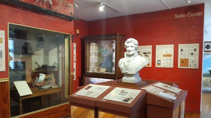 La galerie Cuvier dans les musées du château de Montbéliard