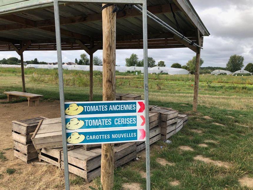 La cueillette de Servigny à Lieusaint
