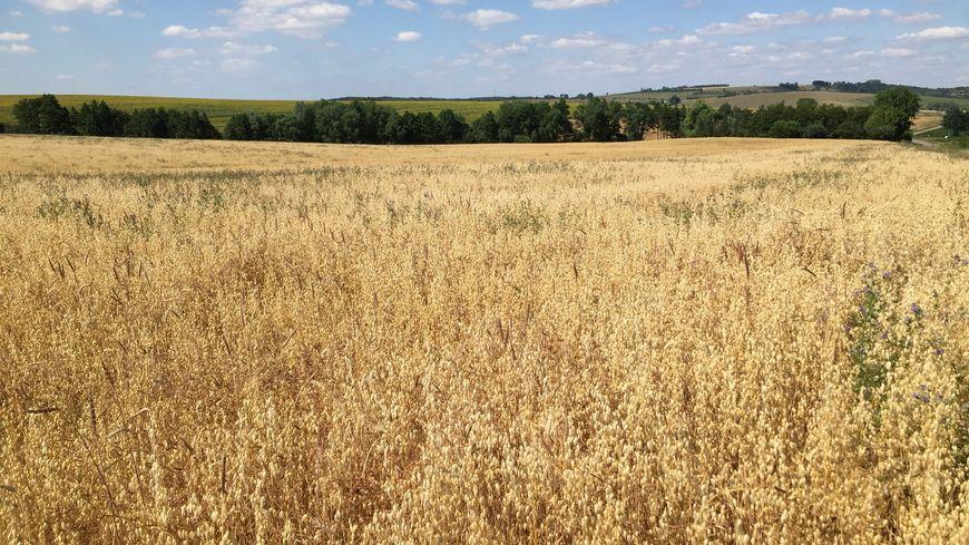 Certains agriculteurs de la Sarthe ont le droit d'irriguer un peu leurs champs. La semaine dernière c'était simplement interdit