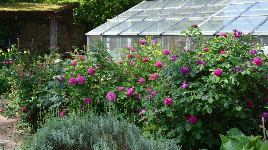 Un jardin fleuri et doté d'équipements simples