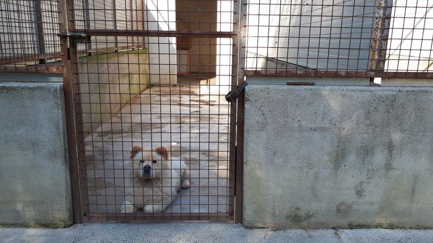 L'un des chiens en attente dans l'un des neuf box de la fourrière de Montauban