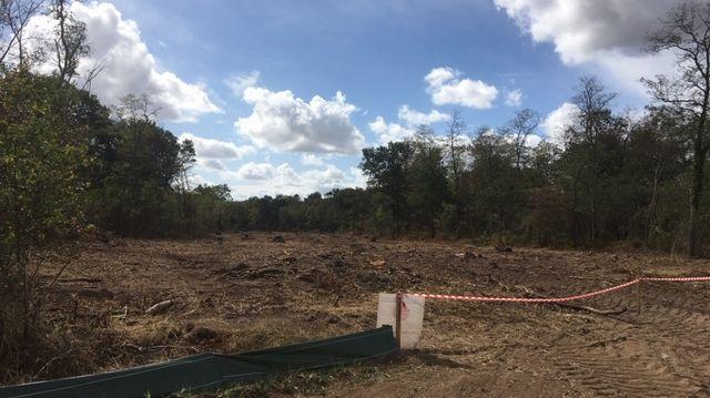 Les arbres coupés sur 40 mètres de large dans le bois de Latingy