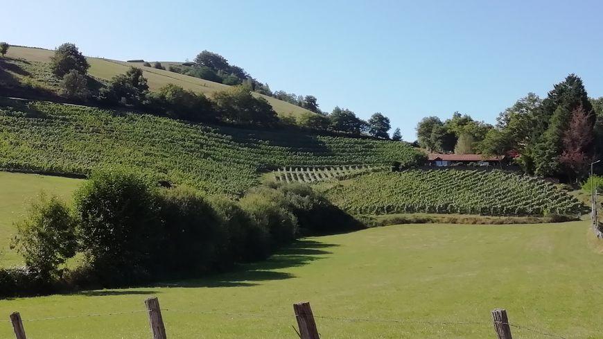 Vignes en terrasses à Irouléguy