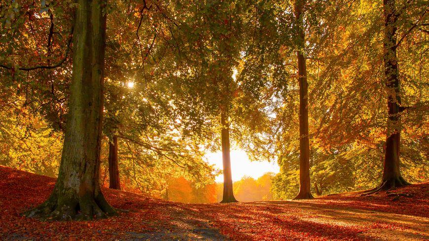 L'automne à Montégut Plantaurel