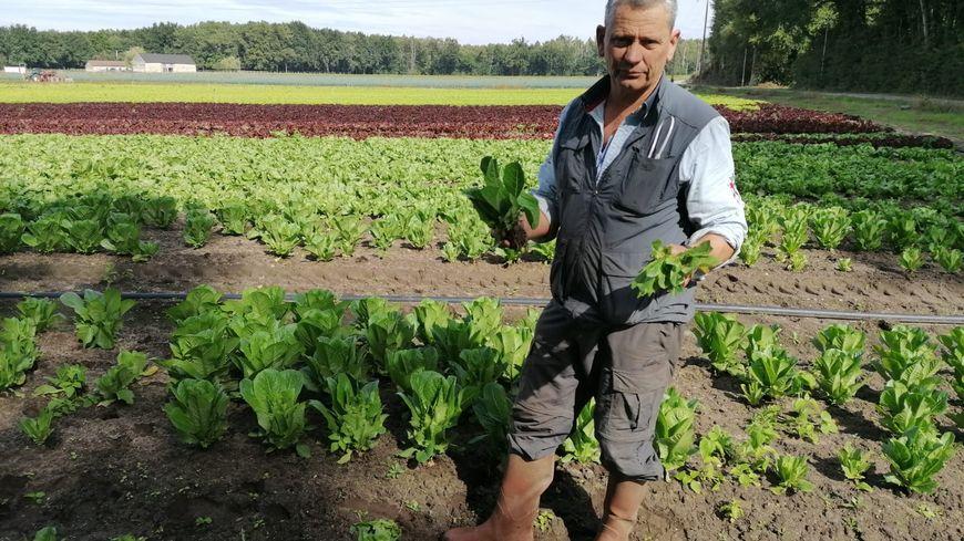 La semaine dernière, Philippe Blin a perdu la moitié de sa récolte de laitues.