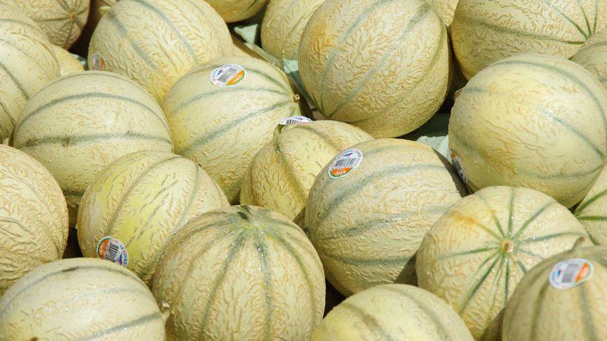 Très gros plan sur des melons.
