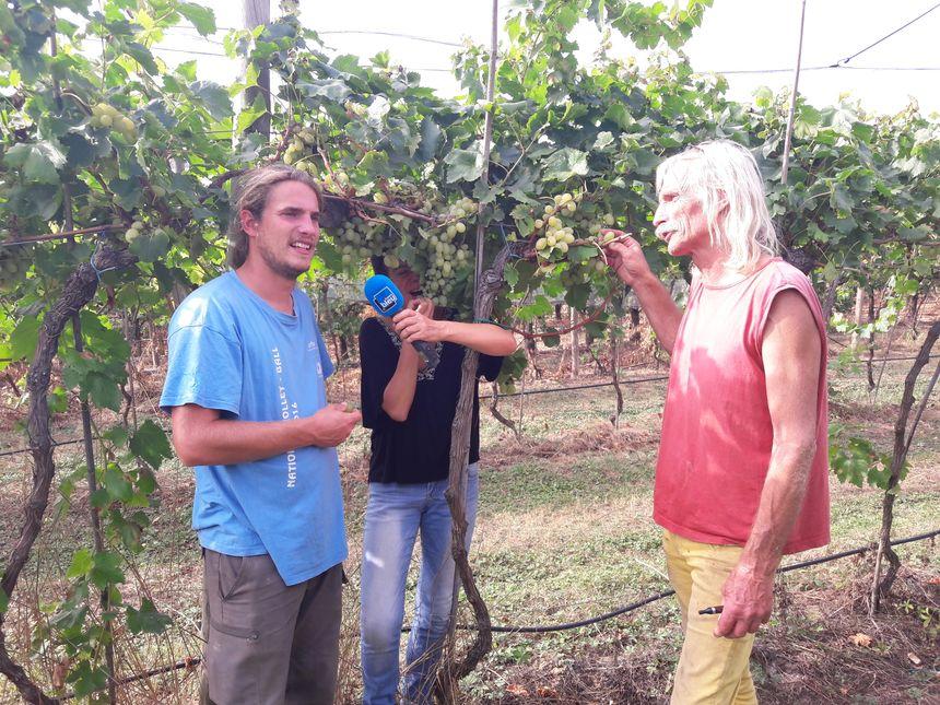 Dans la vigne