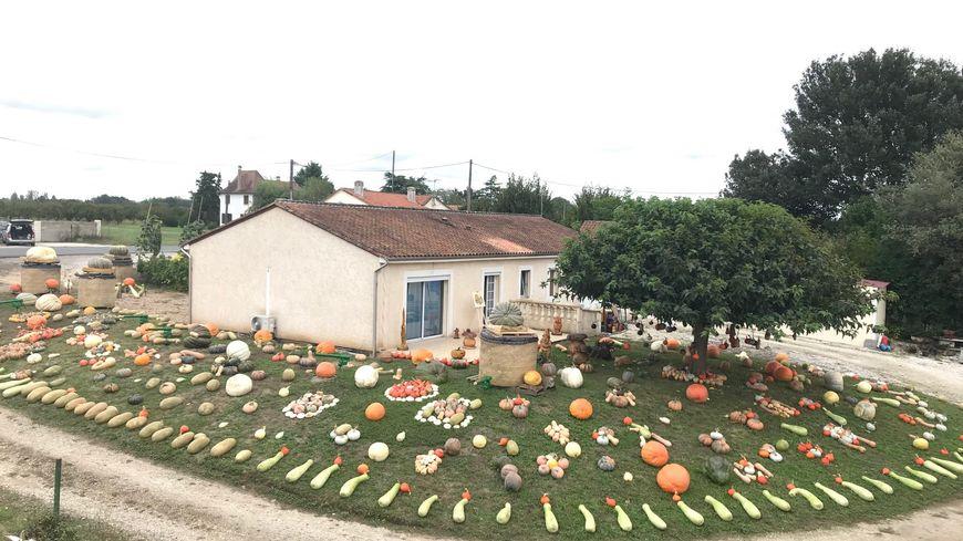 1100 espèces de courges dans un jardin de Saint Pierre d'Eyraud
