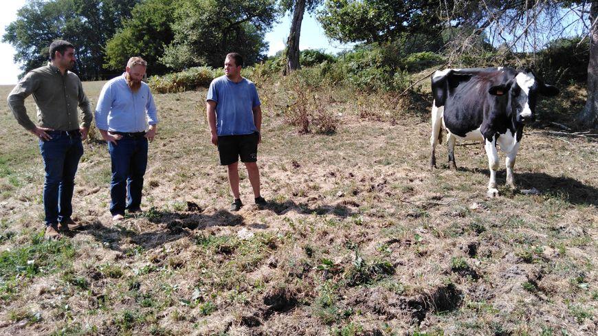 Romain Parisse, des représentants de Gestel et l'une des vaches de l'élevage.