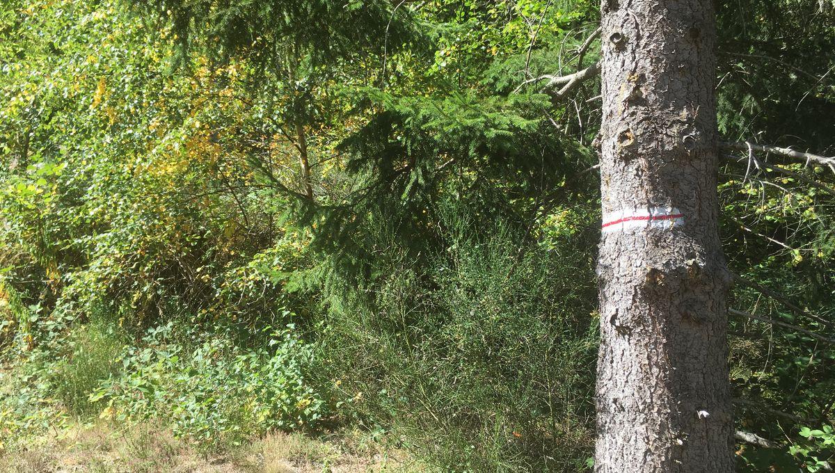 L'inscription de la chaîne des Puys au patrimoine mondial de l'UNESCO a-t-elle eu un impact sur la gestion forestière ?
