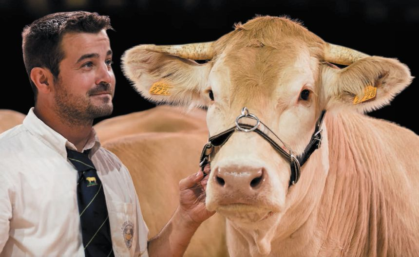 Cyprien Alcouffe et Malika, sa blonde d'Aquitaine, ont les honneurs de l'affiche de ce 28e Sommet de l'élevage.