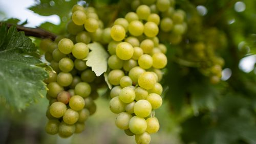 Moissons et vendanges