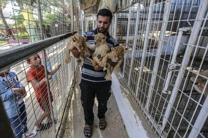 Un Palestinien tient dans ses bras les trois lionceaux du zoo de Gaza, 12/09/2019.