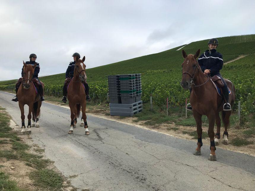 Les chevaux patrouillent uniquement en journée