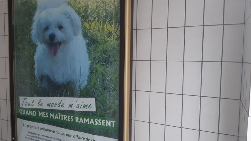 A Albertville, on aime les chiens mais pas les maitres irrespectueux !