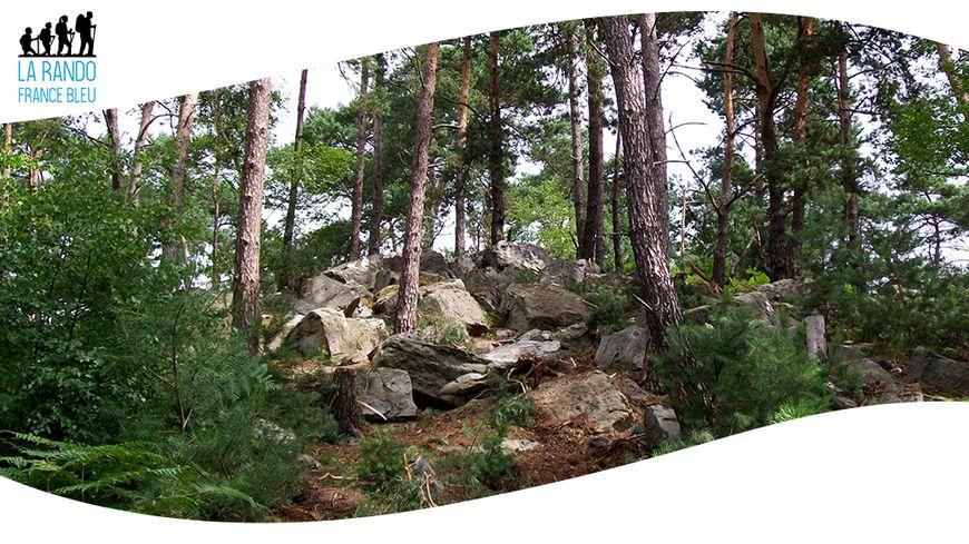 En forêt d'Ermenonville