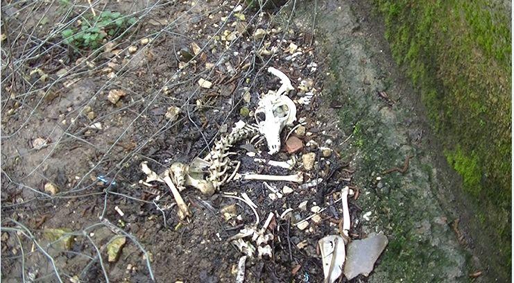 Des ossements de canidés auraient été retrouvés sur l'élevage - Aucun(e)