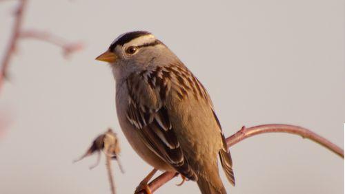 L'impact des néonicotinoïdes sur les oiseaux