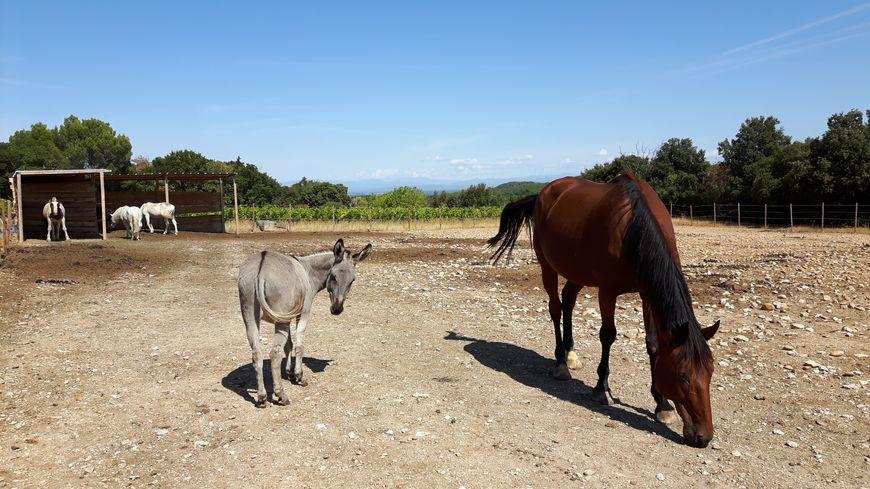 Le centre équestre de Lirac : équitation, équitation adaptée et médiation animale
