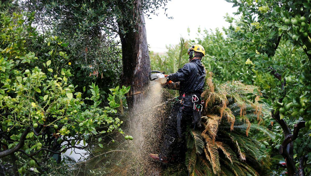 Pour Henri Derepas, oléiculteur bio à la trinité, arracher les oliviers dans les Alpes Maritimes est contre productif.