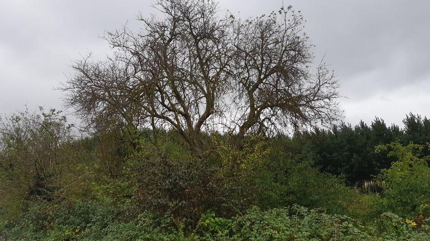 La mortalité des arbres en forte hausse à cause de la sécheresse dans le Poitou