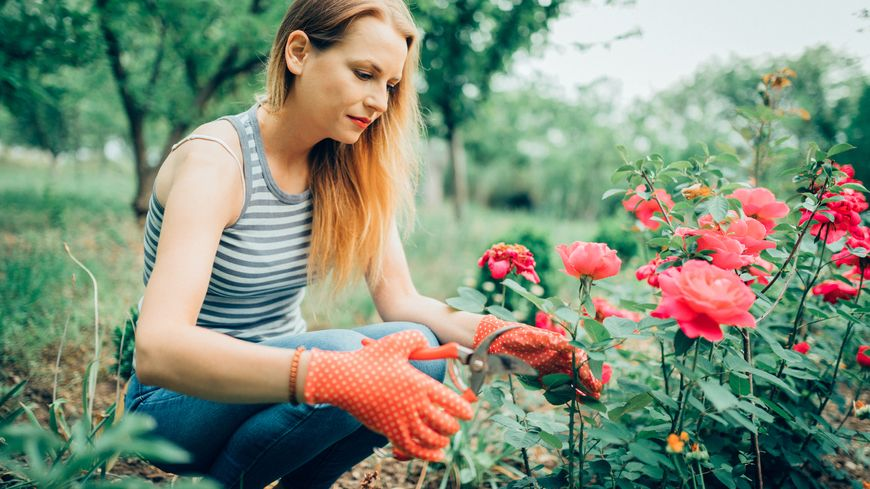 Nettoyage des rosiers