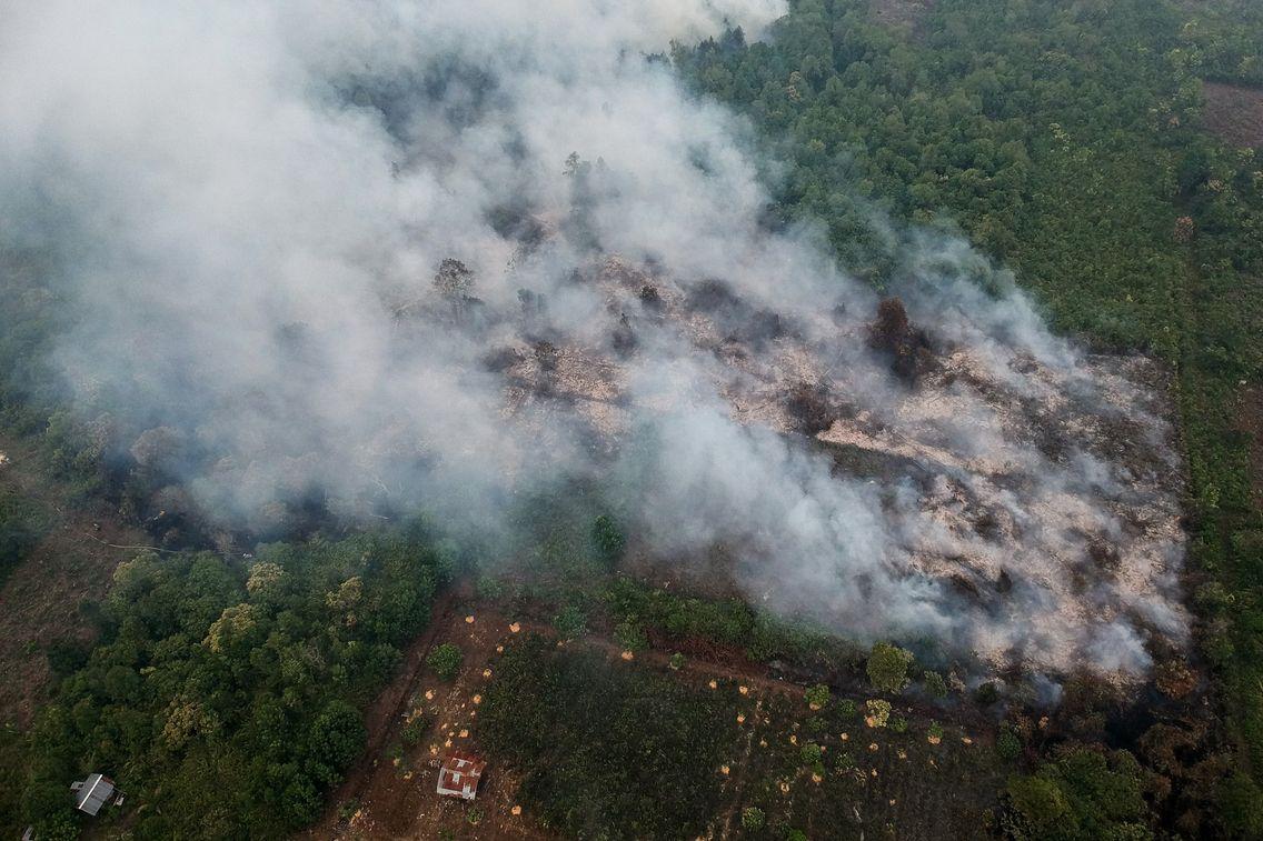 Après l'Amazonie, c'est la forêt indonésienne qui brûle. Mais si, au Brésil, la volonté de développer les terres arables est manifeste, les causes peuvent être différentes de Bornéo à Sumatra.