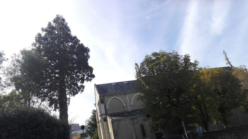 Le lundi 9 septembre, des habitants avaient empêché l'abattage de ce Séquoia centenaire. La police avait du intervenir.
