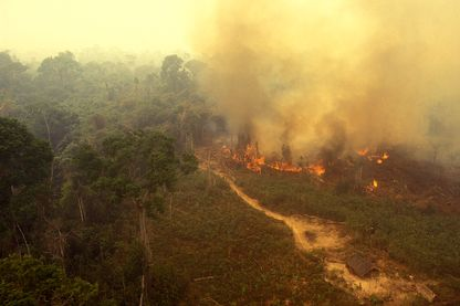 Forêt Amazonienne en feu.