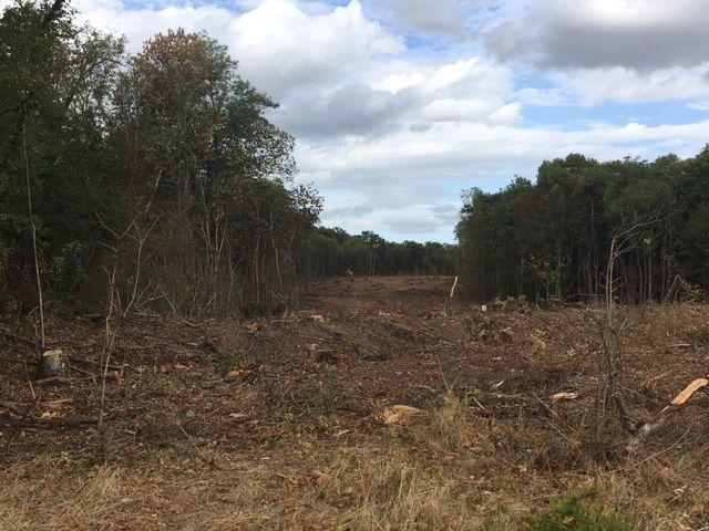 Des arbres ont été coupés dans le bois de Latingy, début septembre, sur le tracé de la future déviation de Jargeau