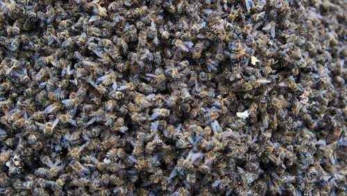 De la disparition des abeilles