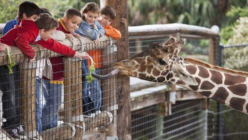 """Au zoo : """"Moi si j'étais une autruche..."""""""