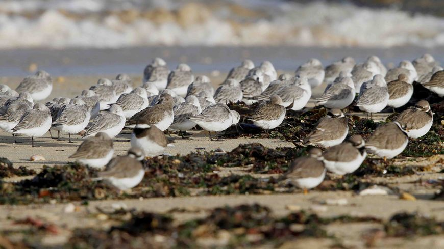Oiseaux au repos sur la laisse de mer