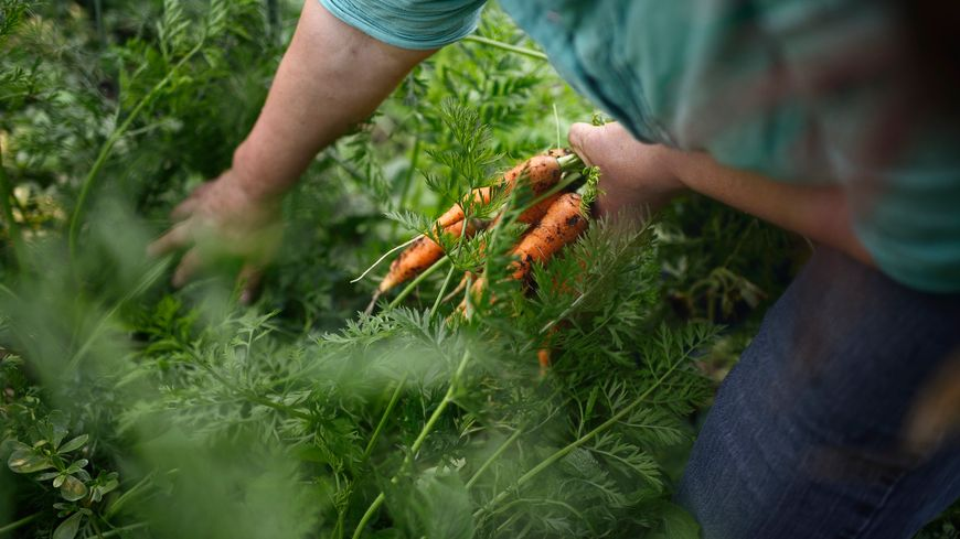 Manger bio et local c'est possible