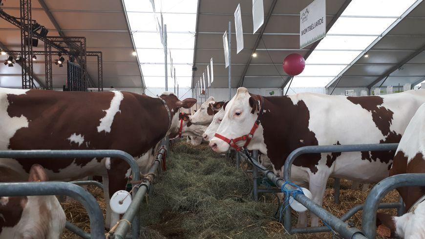 """La """"ferme géante"""" du Sommet de l'élevage compte cette année encore quelques 2000 animaux."""
