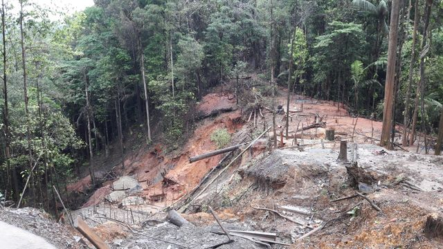 A Cacao la forêt a été éventrée par les orpailleurs illégaux.