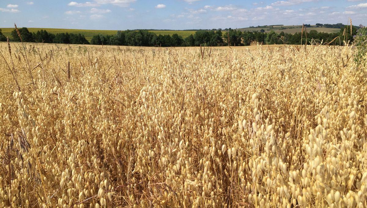 Sécheresse : les mesures de restriction de l'usage de l'eau prolongées en Meurthe-et-Moselle et dans les Vosges