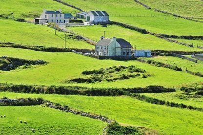 L agriculture sociale en Irlande rencontre un franc succés