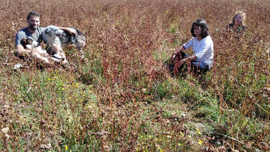Nicolas Durand, son apprentie et Diane Magnaudeix dans un champ de sarrasin.