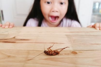 Pourquoi avons-nous une si difficile relation avec les insectes ?