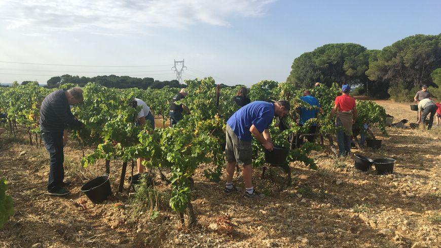 Une quinzaine de visiteurs sont venus récolter les raisins et découvrir le monde du vin le temps d'une journée