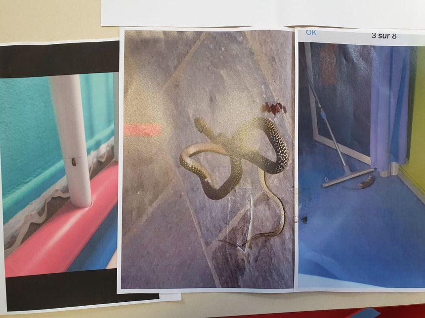Cafards, serpents, rats, à la pouponnière de Corse les enfants en bas âge ont de drôles de collocataires (clichés réalisés par les employées)