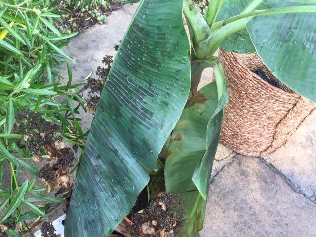 Dans le jardin de Christophe, la suie s'est déposée partout sur le mobilier, la terrasse et les plantes.