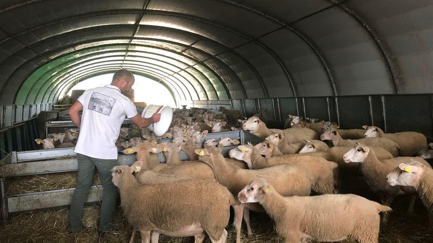 100 à 200 éleveurs n'ont pas de vétérinaire pour leurs bêtes en Dordogne selon le syndicat des vétérinaires d'exercice libéral en Dordogne