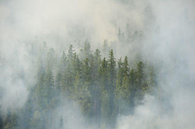La forêt sibérienne en feu (photo prise le 4 août 2019 dans la région de Krasnoyarsk)