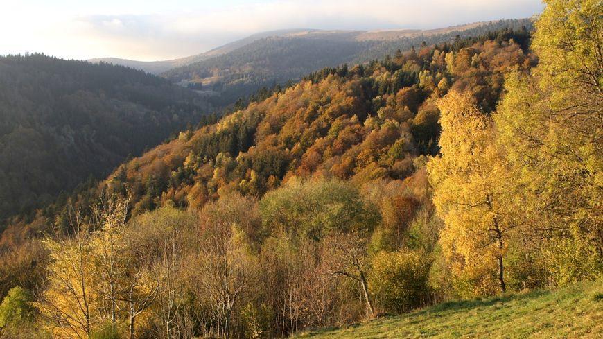 Un espace forestier en Haute Loire
